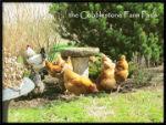 Cobblestone-Farm-Paris-Image-1