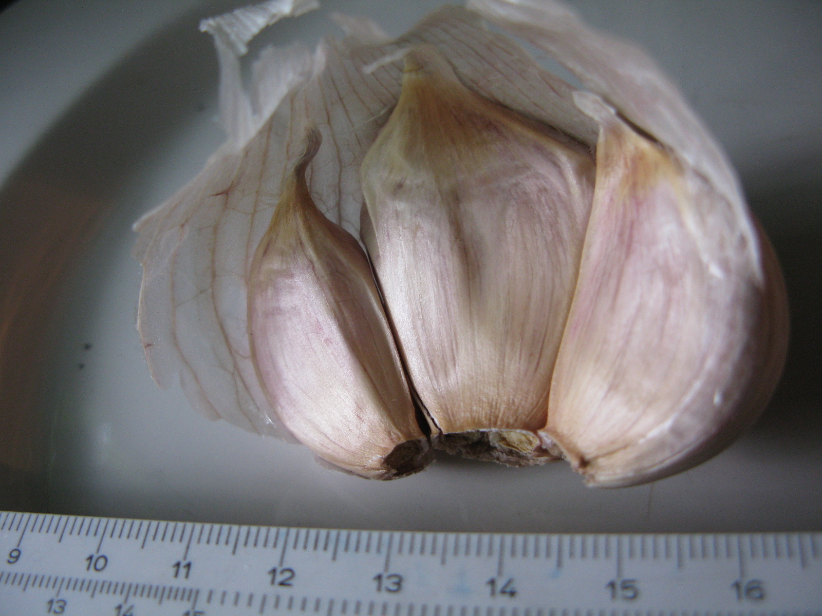 Is this Ont Garlic?2