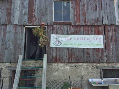 The Cutting Veg Organic Farm, located in Sutton, Ontario, cultivates twenty varieties of garlic from around the world through their Global Garlic Project.