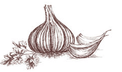 Sketching workshop by Sip & Pint teaches festival visitors how to draw a garlic bulb.