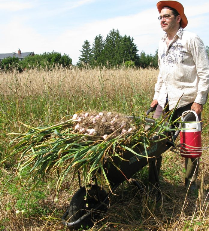 garlic farm, farming garlic, garlic farms